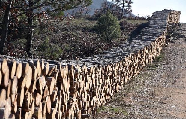 Atik Hisar Barajında Ağaç Katliamı Yeniden Başladı!