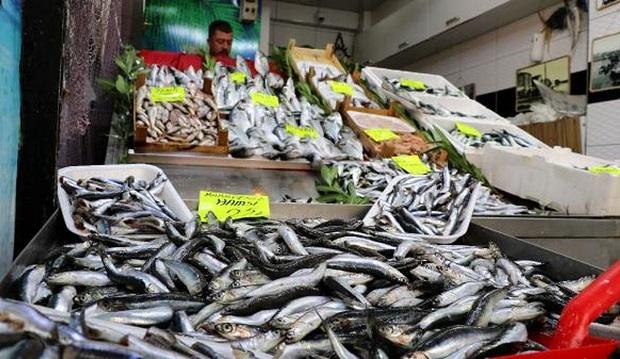 Av Sezonu Başladı.. Balık Fiyatları Düştü..