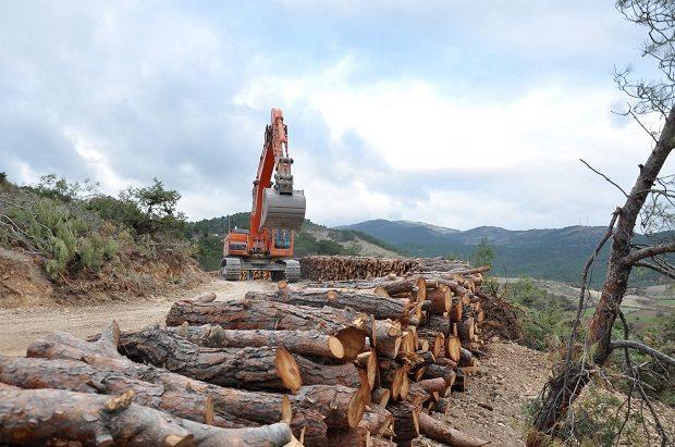 Orman Müdürlüğü ve Altıncılar Bu Cesareti Nereden Alıyor?