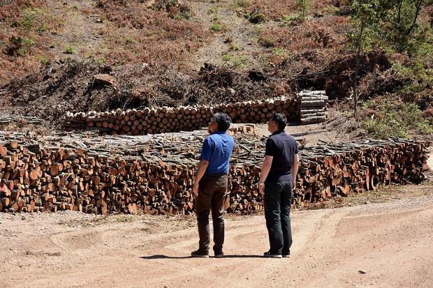 Kaç Ağaç Kesildiğini Madenci Firma da Bilmiyor!!