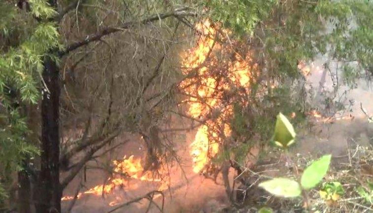 Yıldırım Düştü; 2 Hektar Alan Yandı