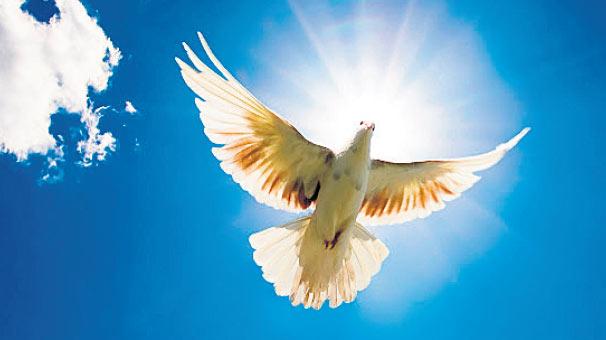 Talih Kuşu Gelibolu'ya Kondu!