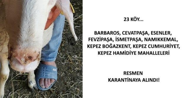 Hayvan Pazarı Kurulup Kurulmayacağı Belli Değil!