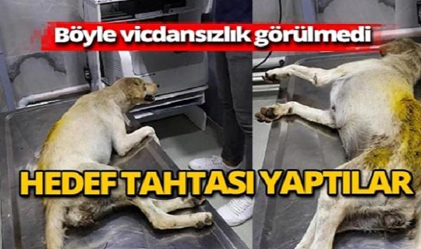 Zavallı Hayvana Akıl Almaz Zulüm..