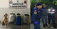Firari Suç Makinesi 22 Kilo Esrarla Yakalandı