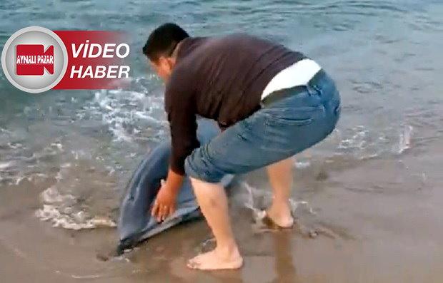 Karaya Vuran Yunus Balığını Vatandaş Kurtardı